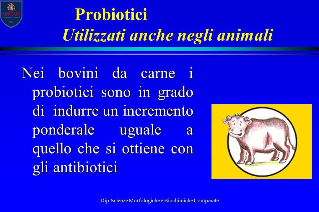 Dip.Scienze Morfologiche e Biochimiche Comparate Probiotici Utilizzati anche negli animali Nei bovini da carne i probiotici sono in grado di indurre u