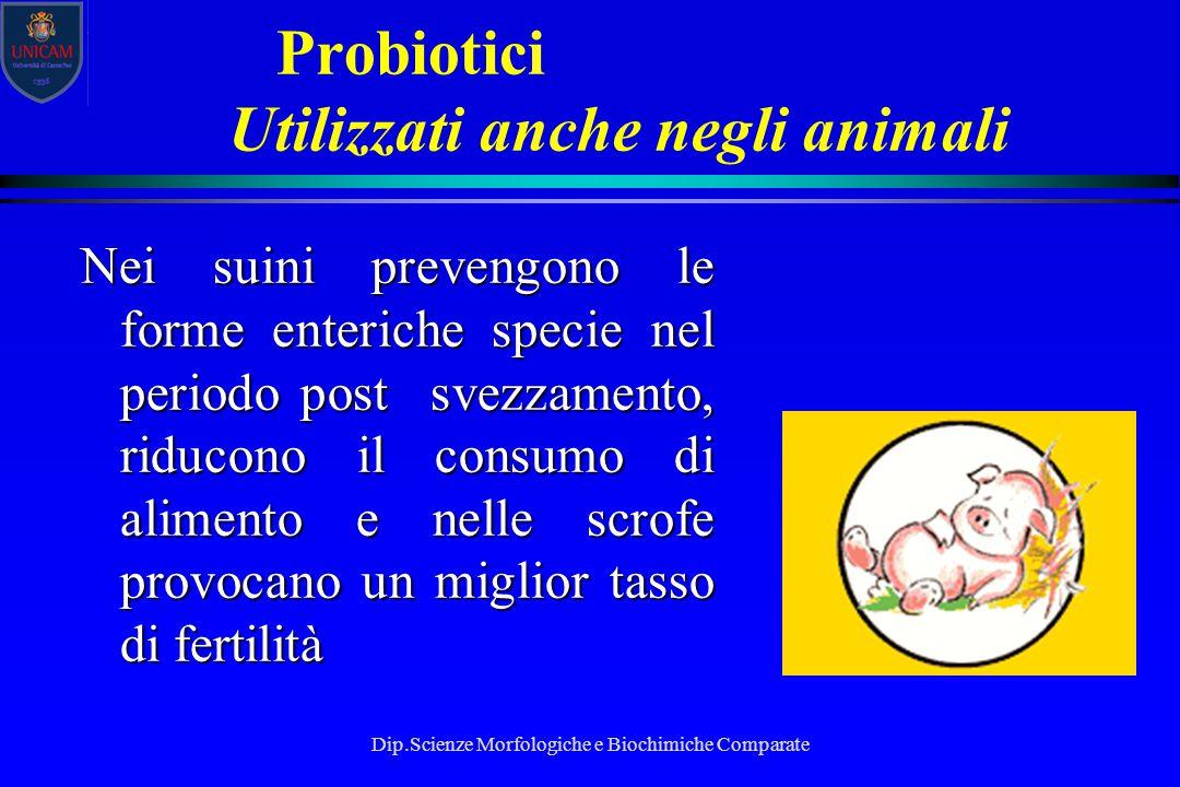 Dip.Scienze Morfologiche e Biochimiche Comparate Probiotici Utilizzati anche negli animali Nei suini prevengono le forme enteriche specie nel periodo