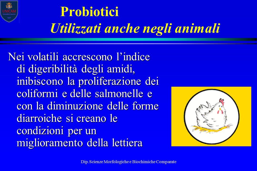 Dip.Scienze Morfologiche e Biochimiche Comparate Probiotici Utilizzati anche negli animali Nei volatili accrescono l'indice di digeribilità degli amid