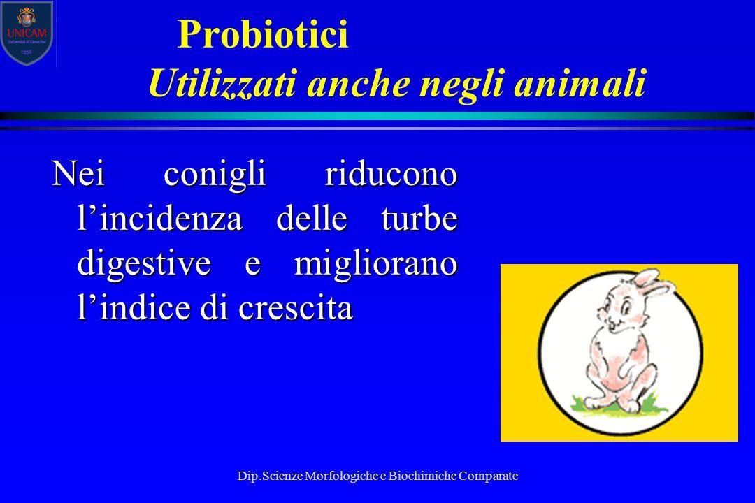 Dip.Scienze Morfologiche e Biochimiche Comparate Probiotici Utilizzati anche negli animali Nei conigli riducono l'incidenza delle turbe digestive e mi