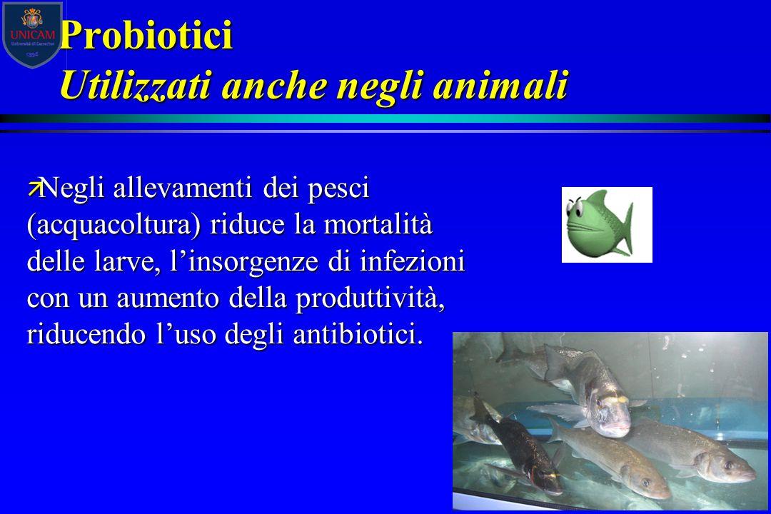 Probiotici Utilizzati anche negli animali ä Negli allevamenti dei pesci (acquacoltura) riduce la mortalità delle larve, l'insorgenze di infezioni con