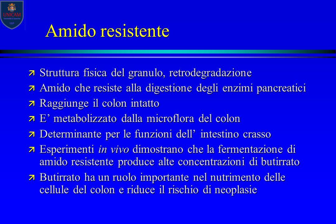 Amido resistente ä Struttura fisica del granulo, retrodegradazione ä Amido che resiste alla digestione degli enzimi pancreatici ä Raggiunge il colon i