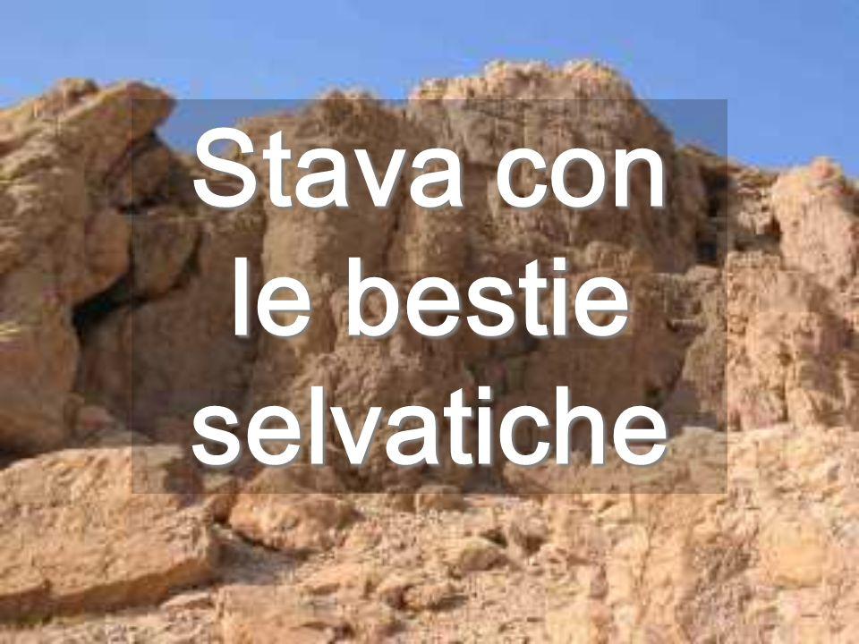 Sconfitto Satana, Dio è l'unico Signore E il deserto fiorirà Siamo immagine di Dio, non possiamo non esserlo No clic
