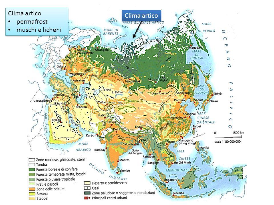 Clima artico permafrost muschi e licheni Clima artico permafrost muschi e licheni