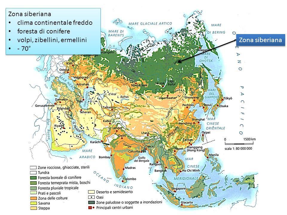 Zona siberiana clima continentale freddo foresta di conifere volpi, zibellini, ermellini - 70° Zona siberiana clima continentale freddo foresta di con