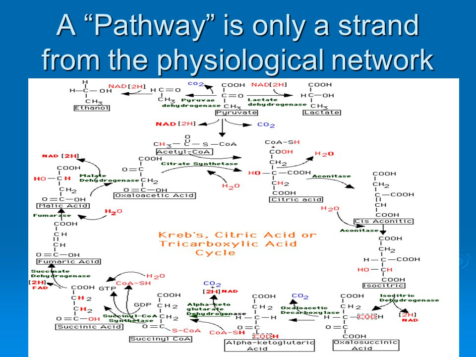 "A ""Pathway"" is only a strand from the physiological network"
