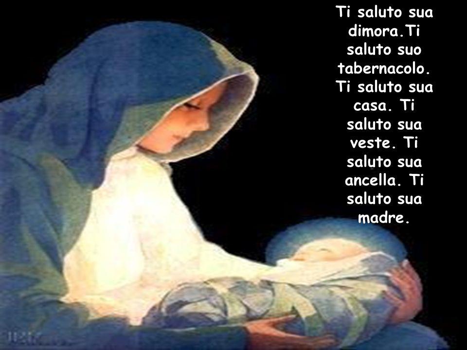 Ti saluto sua dimora.Ti saluto suo tabernacolo. Ti saluto sua casa. Ti saluto sua veste. Ti saluto sua ancella. Ti saluto sua madre.