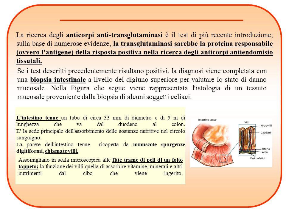 biopsia intestinale Se i test descritti precedentemente risultano positivi, la diagnosi viene completata con una biopsia intestinale a livello del dig