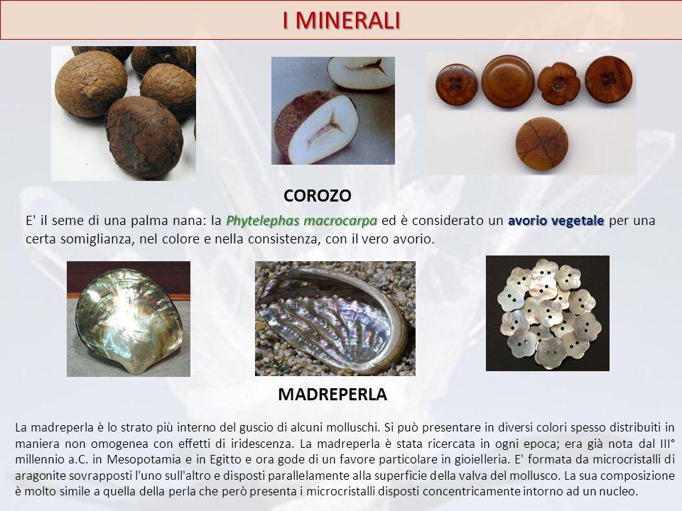 I MINERALI Phytelephas macrocarpa avorio vegetale E' il seme di una palma nana: la Phytelephas macrocarpa ed è considerato un avorio vegetale per una