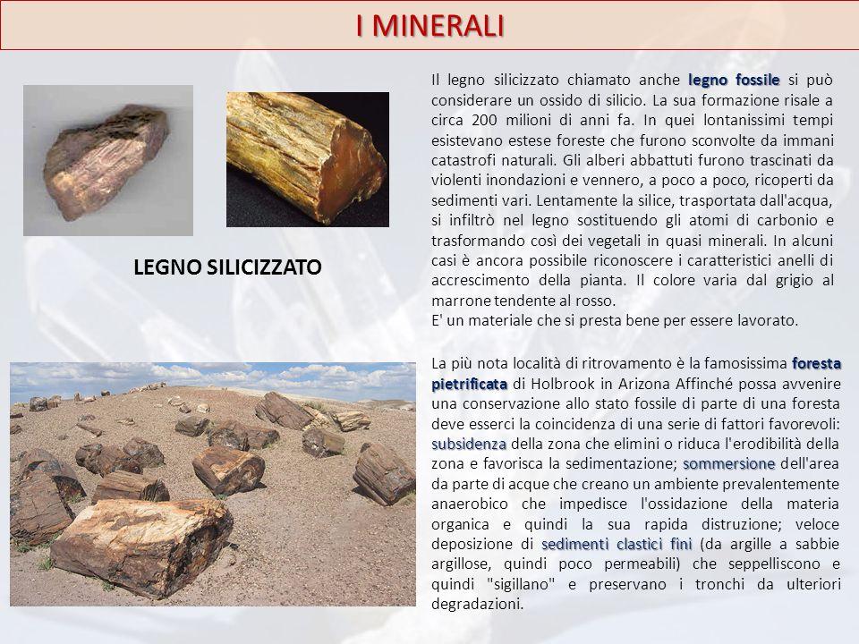 LEGNO SILICIZZATO I MINERALI legno fossile Il legno silicizzato chiamato anche legno fossile si può considerare un ossido di silicio. La sua formazion