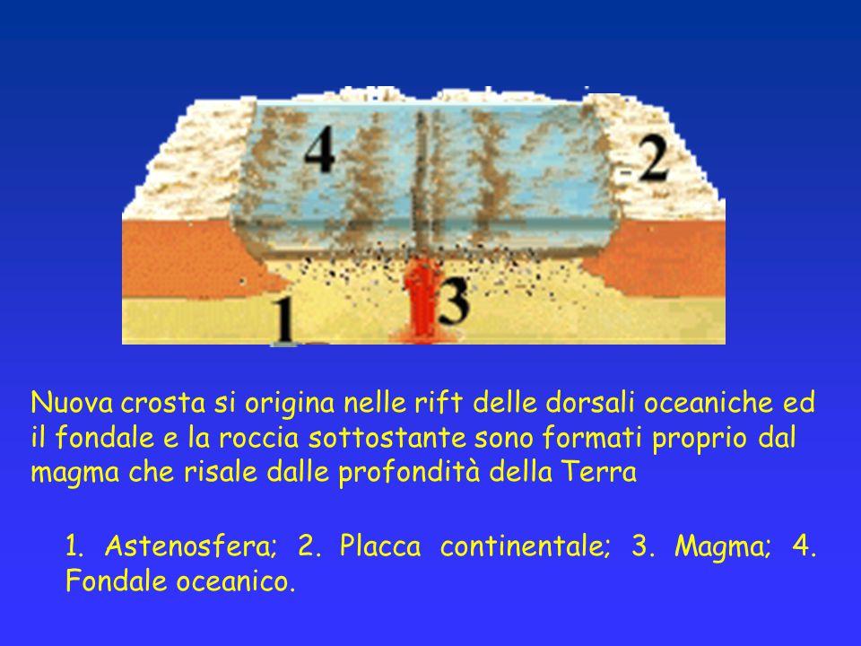 Nuova crosta si origina nelle rift delle dorsali oceaniche ed il fondale e la roccia sottostante sono formati proprio dal magma che risale dalle profo