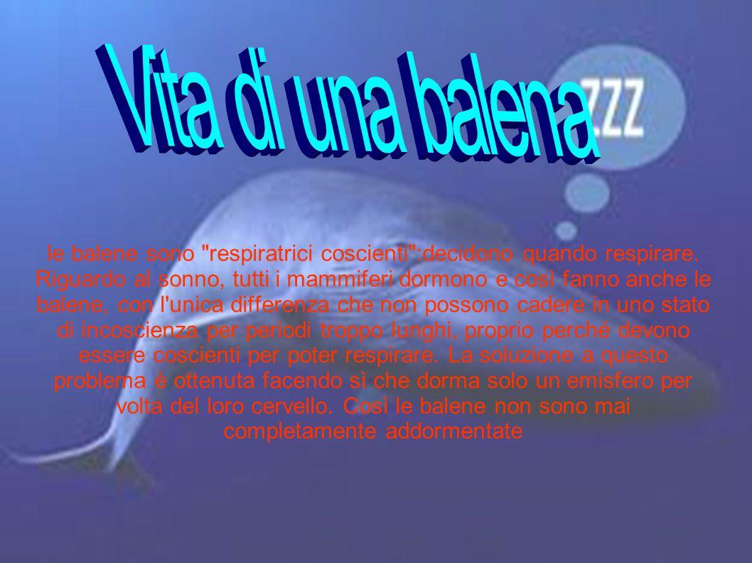 le balene sono