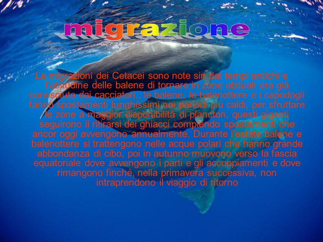 Le migrazioni dei Cetacei sono note sin dai tempi antichi e l'abitudine delle balene di tornare in zone abituali era già conosciuta dai cacciatori., l