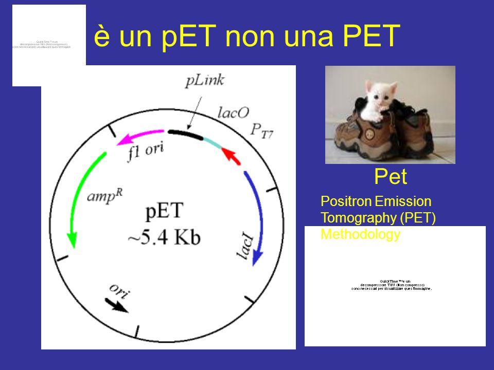 è un pET non una PET Pet Positron Emission Tomography (PET) Methodology