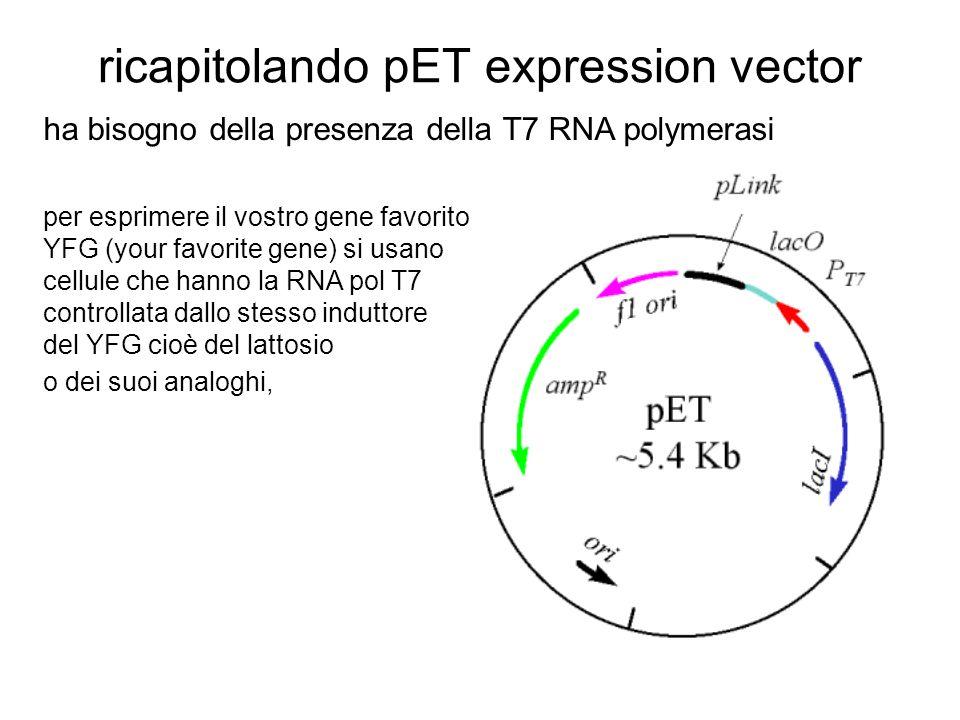 ricapitolando pET expression vector ha bisogno della presenza della T7 RNA polymerasi per esprimere il vostro gene favorito YFG (your favorite gene) si usano cellule che hanno la RNA pol T7 controllata dallo stesso induttore del YFG cioè del lattosio o dei suoi analoghi,