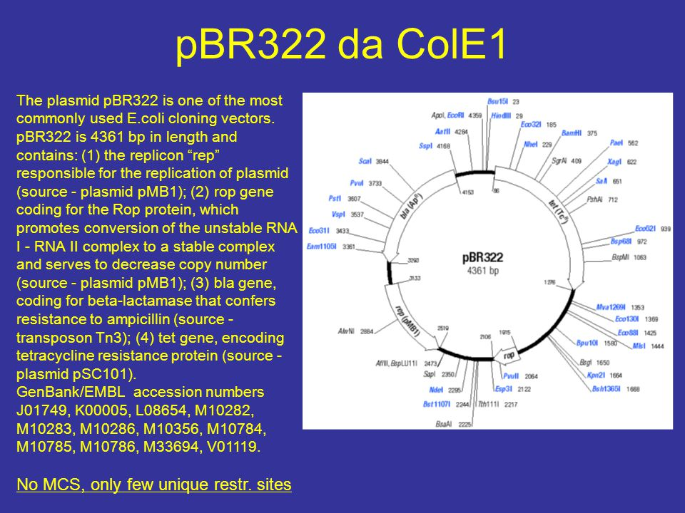 pBluescript MCS rna polimerasi dei fagi T3 e T7 ed Sp6 per avere sonde a singola elica pBluescript II KS(-), pBluescript II KS(+)