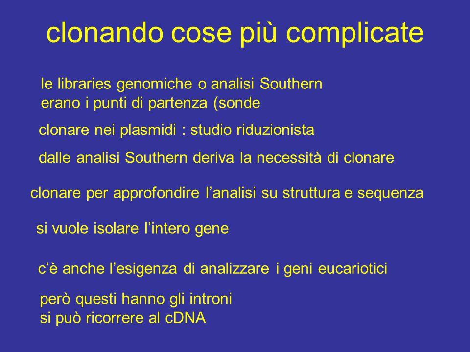 clonando cose più complicate clonare nei plasmidi : studio riduzionista dalle analisi Southern deriva la necessità di clonare clonare per approfondire l'analisi su struttura e sequenza si vuole isolare l'intero gene c'è anche l'esigenza di analizzare i geni eucariotici però questi hanno gli introni si può ricorrere al cDNA le libraries genomiche o analisi Southern erano i punti di partenza (sonde