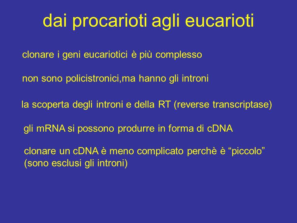 dai procarioti agli eucarioti clonare i geni eucariotici è più complesso non sono policistronici,ma hanno gli introni la scoperta degli introni e della RT (reverse transcriptase) gli mRNA si possono produrre in forma di cDNA clonare un cDNA è meno complicato perchè è piccolo (sono esclusi gli introni)