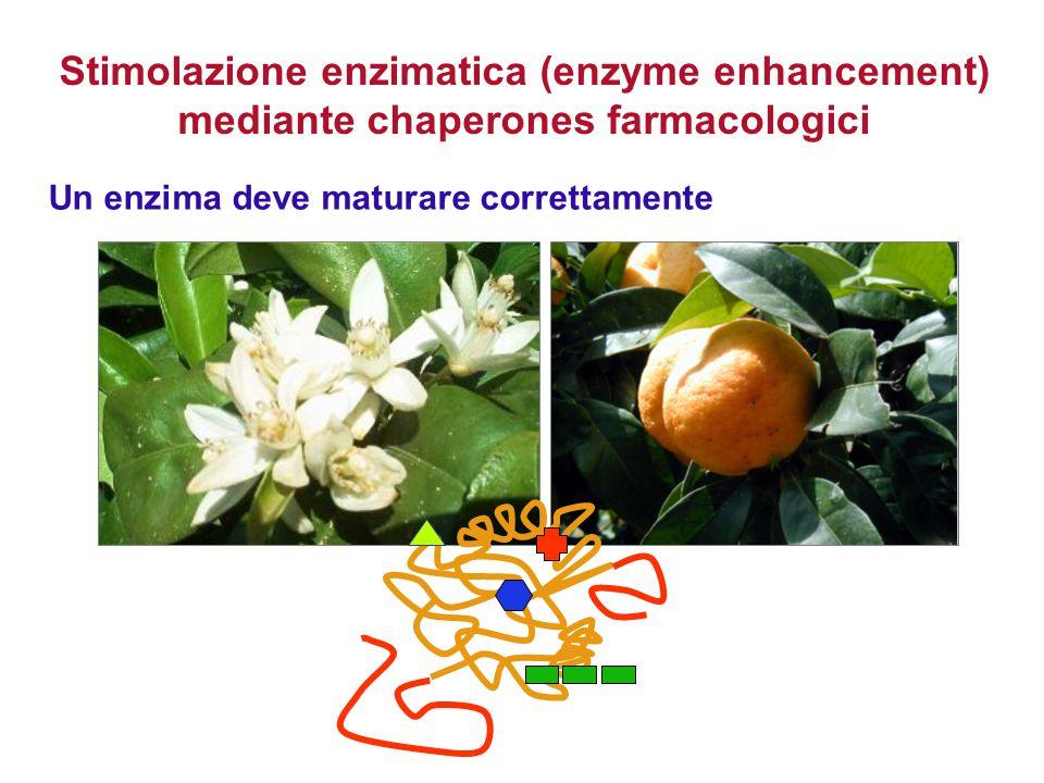 Un enzima deve maturare correttamente