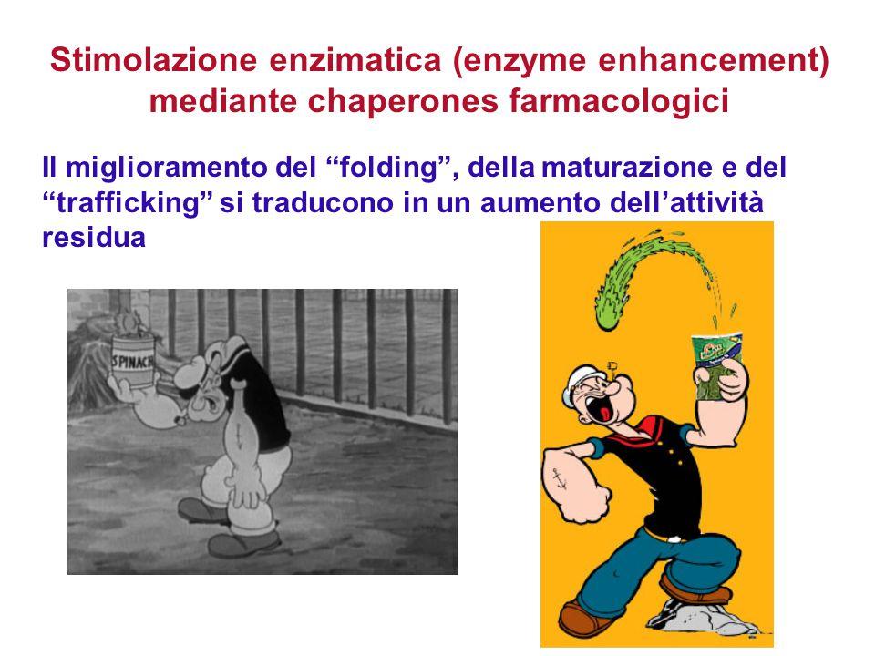 """Il miglioramento del """"folding"""", della maturazione e del """"trafficking"""" si traducono in un aumento dell'attività residua Stimolazione enzimatica (enzyme"""