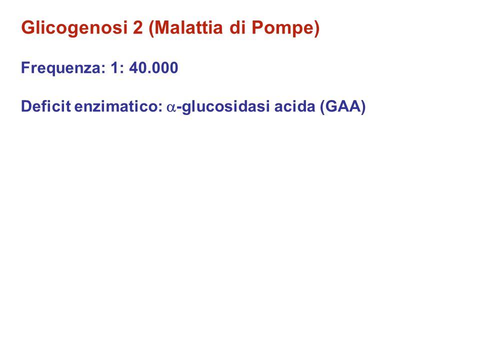 Glicogenosi 2 (Malattia di Pompe) Frequenza: 1: 40.000 Deficit enzimatico:  -glucosidasi acida (GAA)