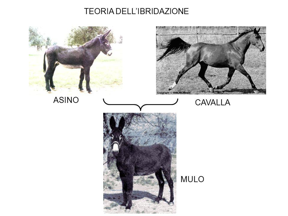 ASINO CAVALLA MULO TEORIA DELL'IBRIDAZIONE