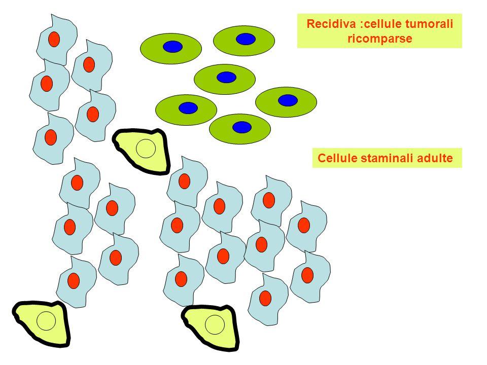 Ipotesi: le cellule staminali tumorali adulte avendo attivato il gene p21 proliferano lentamente:risultano immuni alla azione dei farmaci,hanno più tempo per rimediare ai danni subiti: possono rigenerare le cellule tumorali che ricompaiono con la recidiva