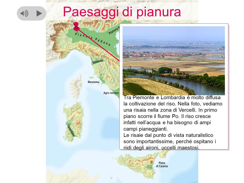 Paesaggi di pianura Tra Piemonte e Lombardia è molto diffusa la coltivazione del riso. Nella foto, vediamo una risaia nella zona di Vercelli. In primo