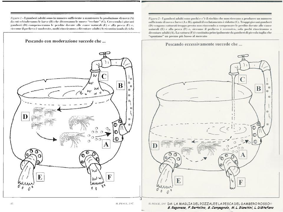 Uila-Cres-ShoreLine 2004 DA: LA MAGLIA DEL POZZALE E LA PESCA DEL GAMBERO ROSSO S.Ragonese, F.Bertolino, S.Campagnolo, M.L.Bianchini, L.DiStefano
