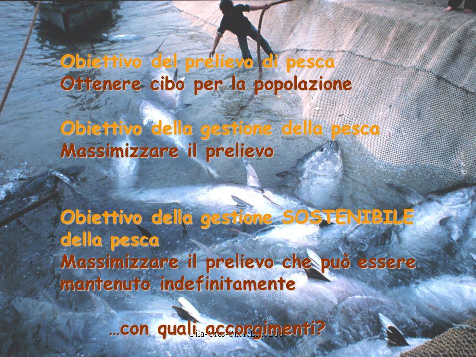 Uila-Cres-ShoreLine 2004 Obiettivo del prelievo di pesca Ottenere cibo per la popolazione Obiettivo della gestione della pesca Massimizzare il prelievo Obiettivo della gestione SOSTENIBILE della pesca Massimizzare il prelievo che può essere mantenuto indefinitamente …con quali accorgimenti