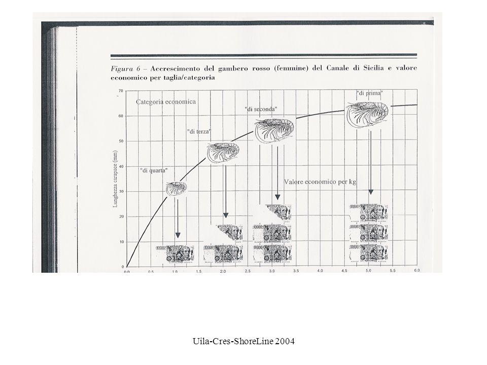 Uila-Cres-ShoreLine 2004