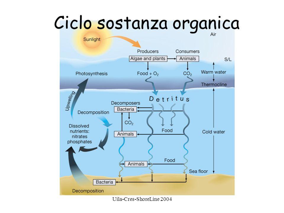 Uila-Cres-ShoreLine 2004 Ciclo sostanza organica