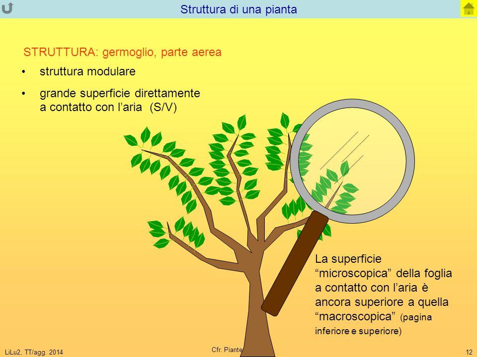 LiLu2, TT/agg. 2014 Cfr. Piante-Animali 12 Struttura di una pianta struttura modulare grande superficie direttamente a contatto con l'aria (S/V) STRUT