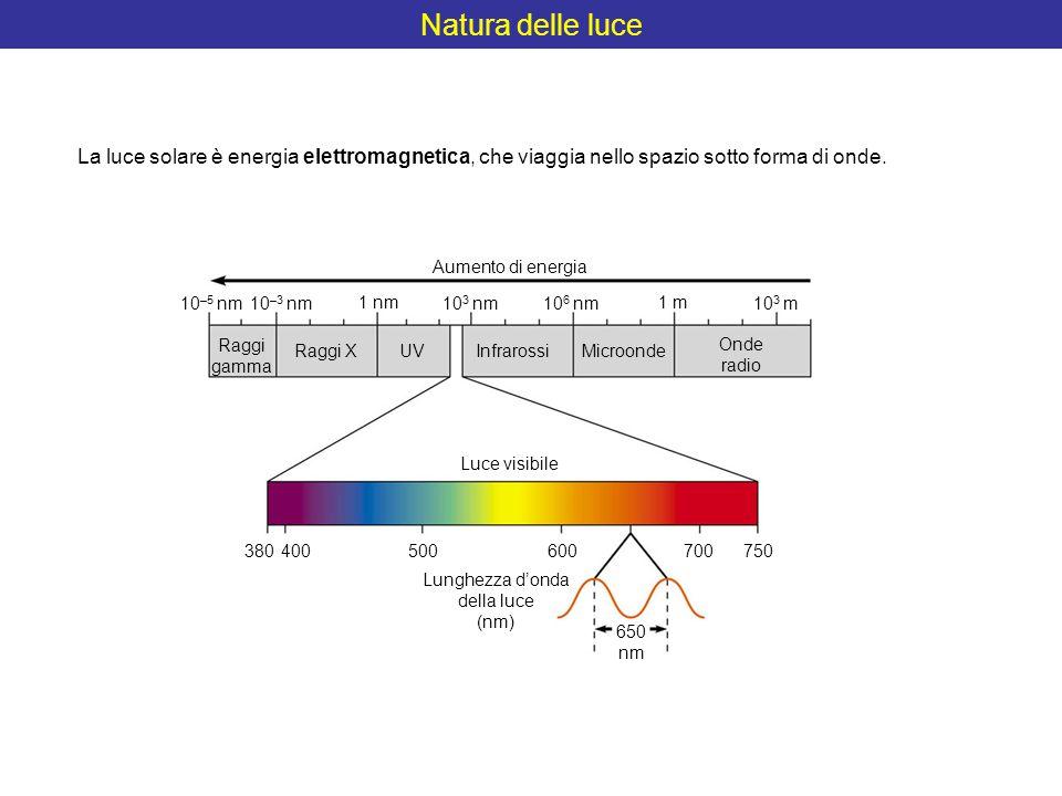 Natura delle luce Aumento di energia 10 –5 nm10 –3 nm 1 nm 10 3 nm10 6 nm 1 m 10 3 m Raggi gamma Raggi XUVInfrarossi Microonde Onde radio Luce visibil