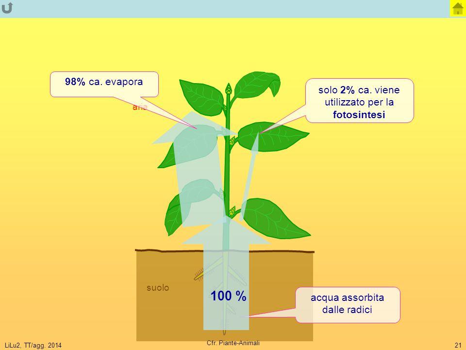 LiLu2, TT/agg. 2014 Cfr. Piante-Animali 21 suolo aria solo 2% ca. viene utilizzato per la fotosintesi acqua assorbita dalle radici 98% ca. evapora 100