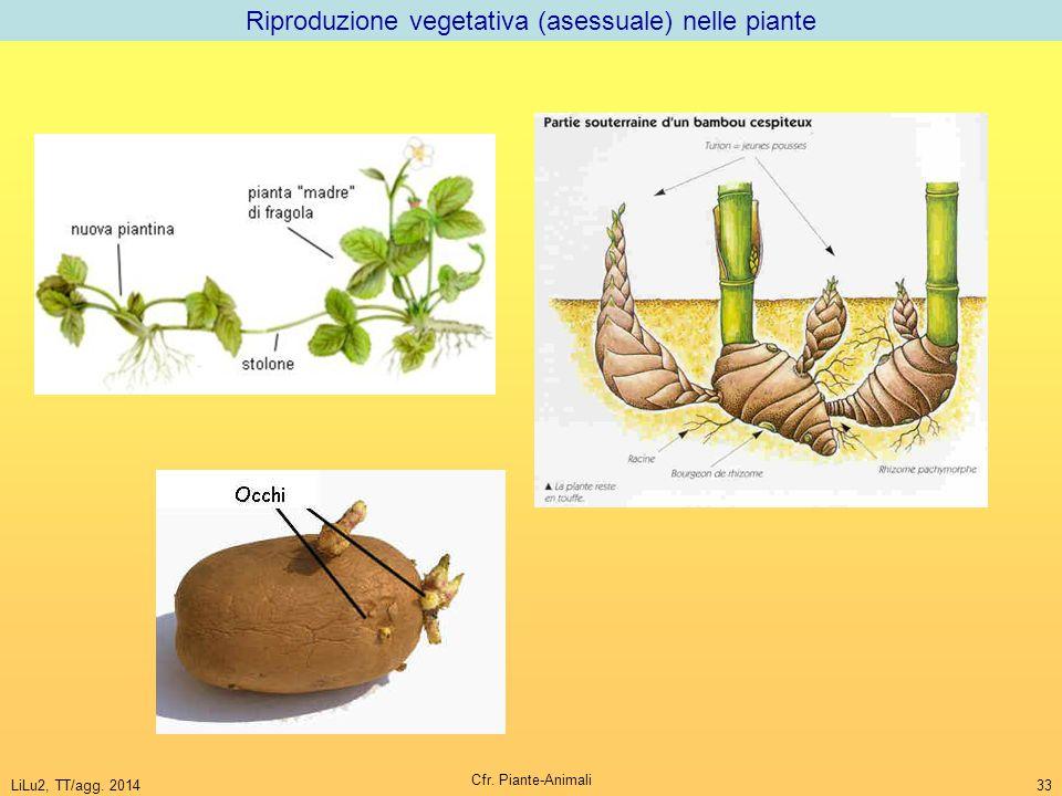Riproduzione vegetativa (asessuale) nelle piante LiLu2, TT/agg. 2014 Cfr. Piante-Animali 33