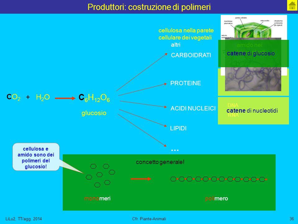 LiLu2, TT/agg. 2014Cfr. Piante-Animali36 concetto generale! Produttori: costruzione di polimeri C 6 H 12 O 6 glucosio CO2CO2 H2OH2O + altri CARBOIDRAT