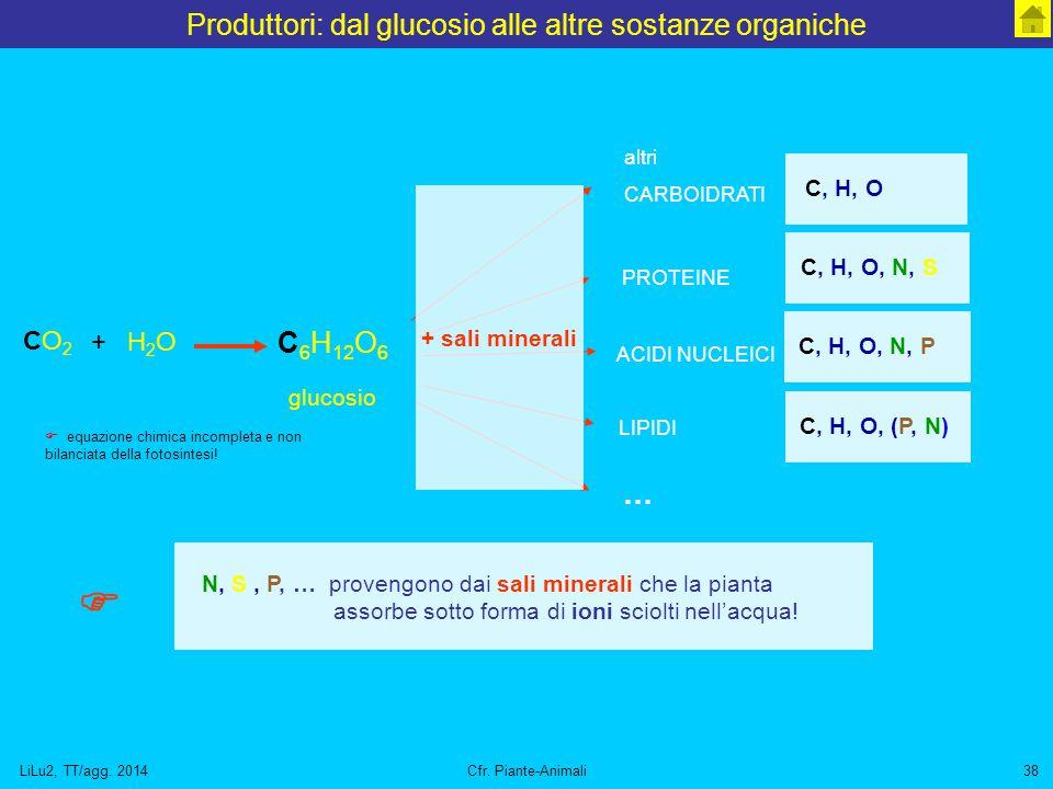 LiLu2, TT/agg. 2014Cfr. Piante-Animali38 Produttori: dal glucosio alle altre sostanze organiche C 6 H 12 O 6 glucosio CO2CO2 H2OH2O + altri CARBOIDRAT