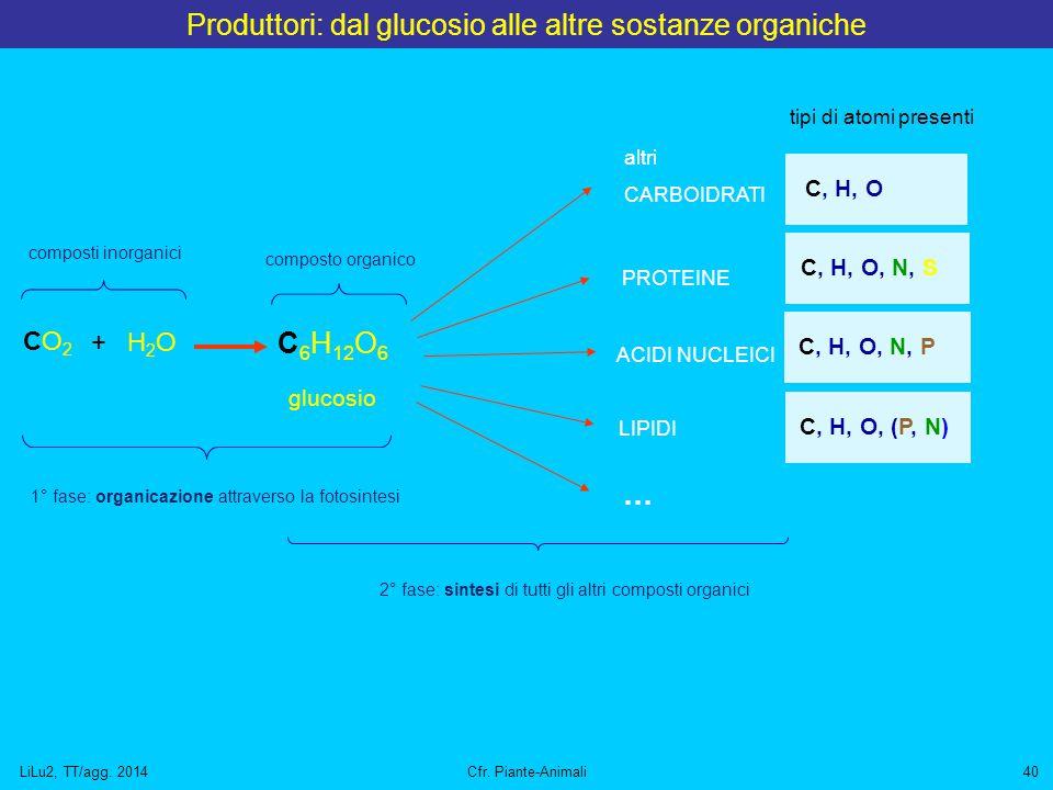 LiLu2, TT/agg. 2014Cfr. Piante-Animali40 Produttori: dal glucosio alle altre sostanze organiche C 6 H 12 O 6 glucosio CO2CO2 H2OH2O + altri CARBOIDRAT