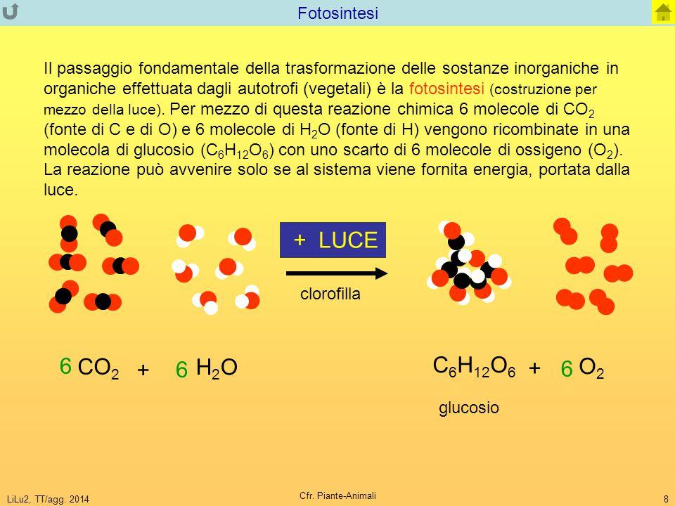 LiLu2, TT/agg. 2014 Cfr. Piante-Animali 8 Fotosintesi Il passaggio fondamentale della trasformazione delle sostanze inorganiche in organiche effettuat