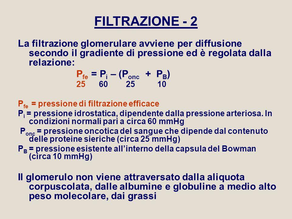 FILTRAZIONE - 2 La filtrazione glomerulare avviene per diffusione secondo il gradiente di pressione ed è regolata dalla relazione: P fe = P i – (P onc