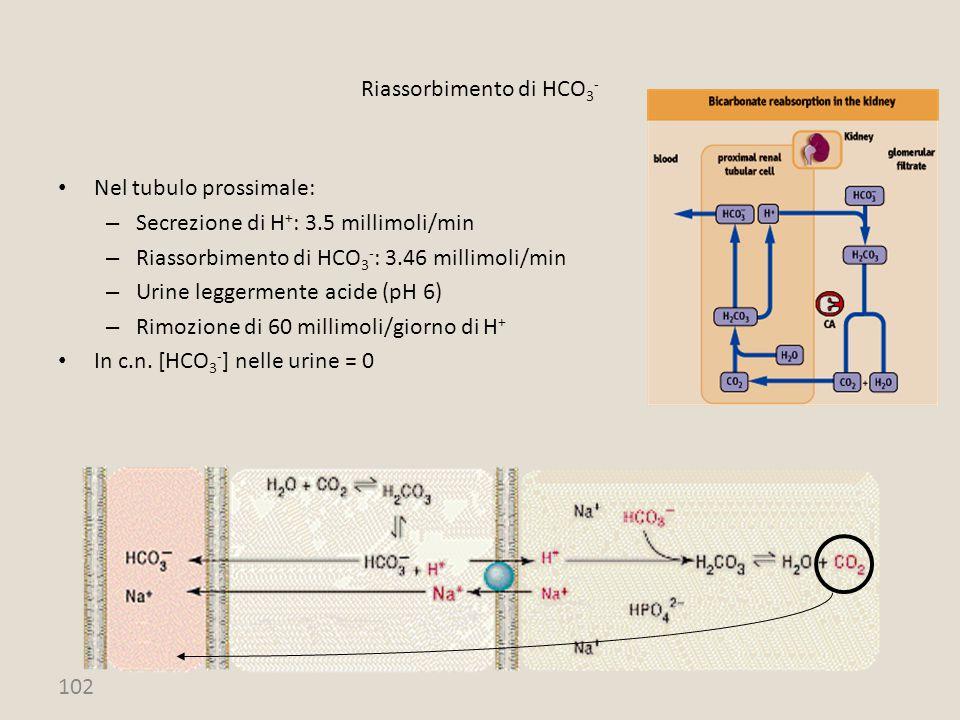 102 Nel tubulo prossimale: – Secrezione di H + : 3.5 millimoli/min – Riassorbimento di HCO 3 - : 3.46 millimoli/min – Urine leggermente acide (pH 6) –