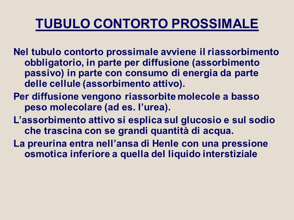 TUBULO CONTORTO PROSSIMALE Nel tubulo contorto prossimale avviene il riassorbimento obbligatorio, in parte per diffusione (assorbimento passivo) in pa
