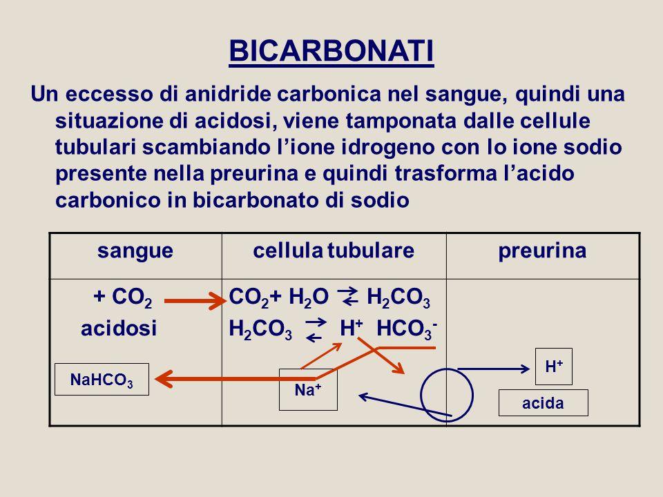 BICARBONATI Un eccesso di anidride carbonica nel sangue, quindi una situazione di acidosi, viene tamponata dalle cellule tubulari scambiando l'ione id