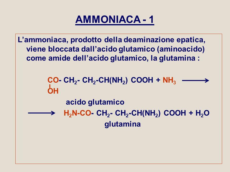 AMMONIACA - 1 L'ammoniaca, prodotto della deaminazione epatica, viene bloccata dall'acido glutamico (aminoacido) come amide dell'acido glutamico, la g