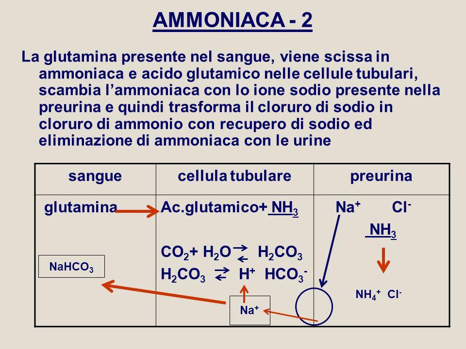 AMMONIACA - 2 La glutamina presente nel sangue, viene scissa in ammoniaca e acido glutamico nelle cellule tubulari, scambia l'ammoniaca con lo ione so