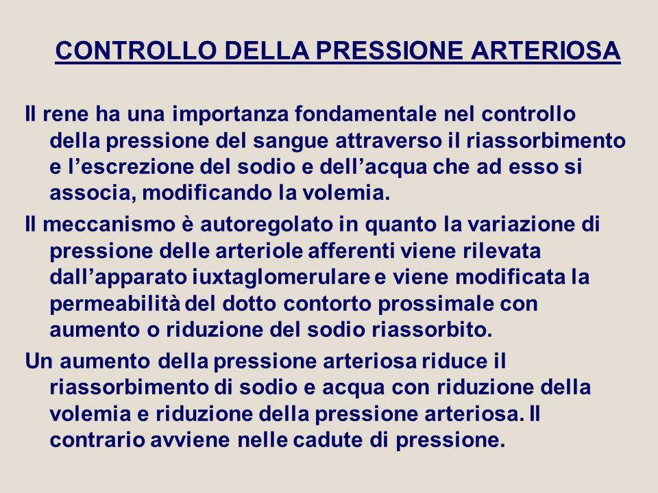 CONTROLLO DELLA PRESSIONE ARTERIOSA Il rene ha una importanza fondamentale nel controllo della pressione del sangue attraverso il riassorbimento e l'e