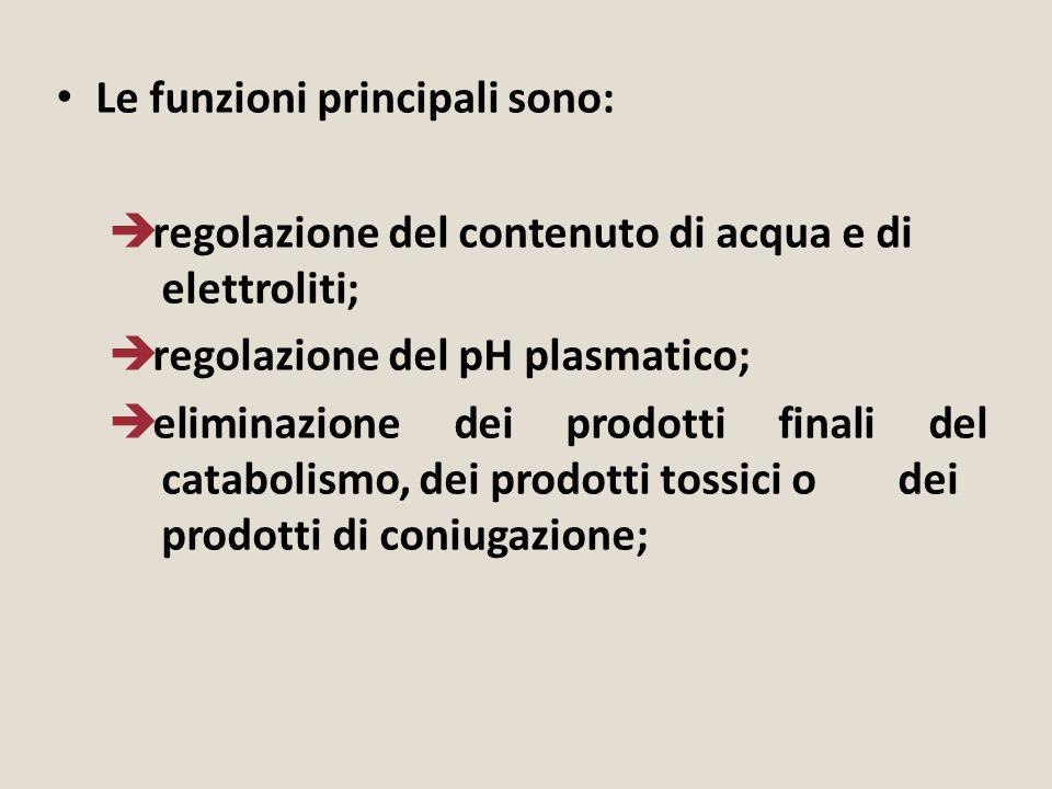 Le funzioni principali sono:  regolazione del contenuto di acqua e di elettroliti;  regolazione del pH plasmatico;  eliminazione dei prodotti final