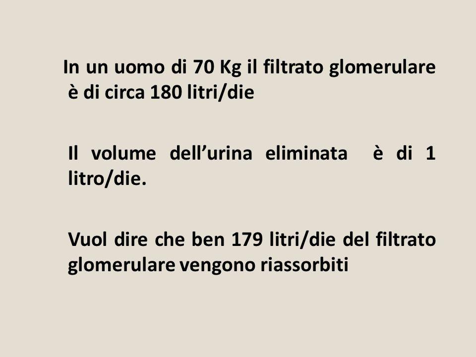 In un uomo di 70 Kg il filtrato glomerulare è di circa 180 litri/die Il volume dell'urina eliminata è di 1 litro/die. Vuol dire che ben 179 litri/die