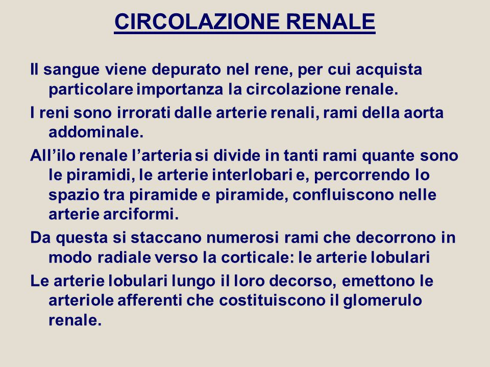 SCHEMA CIRCOLO RENALE